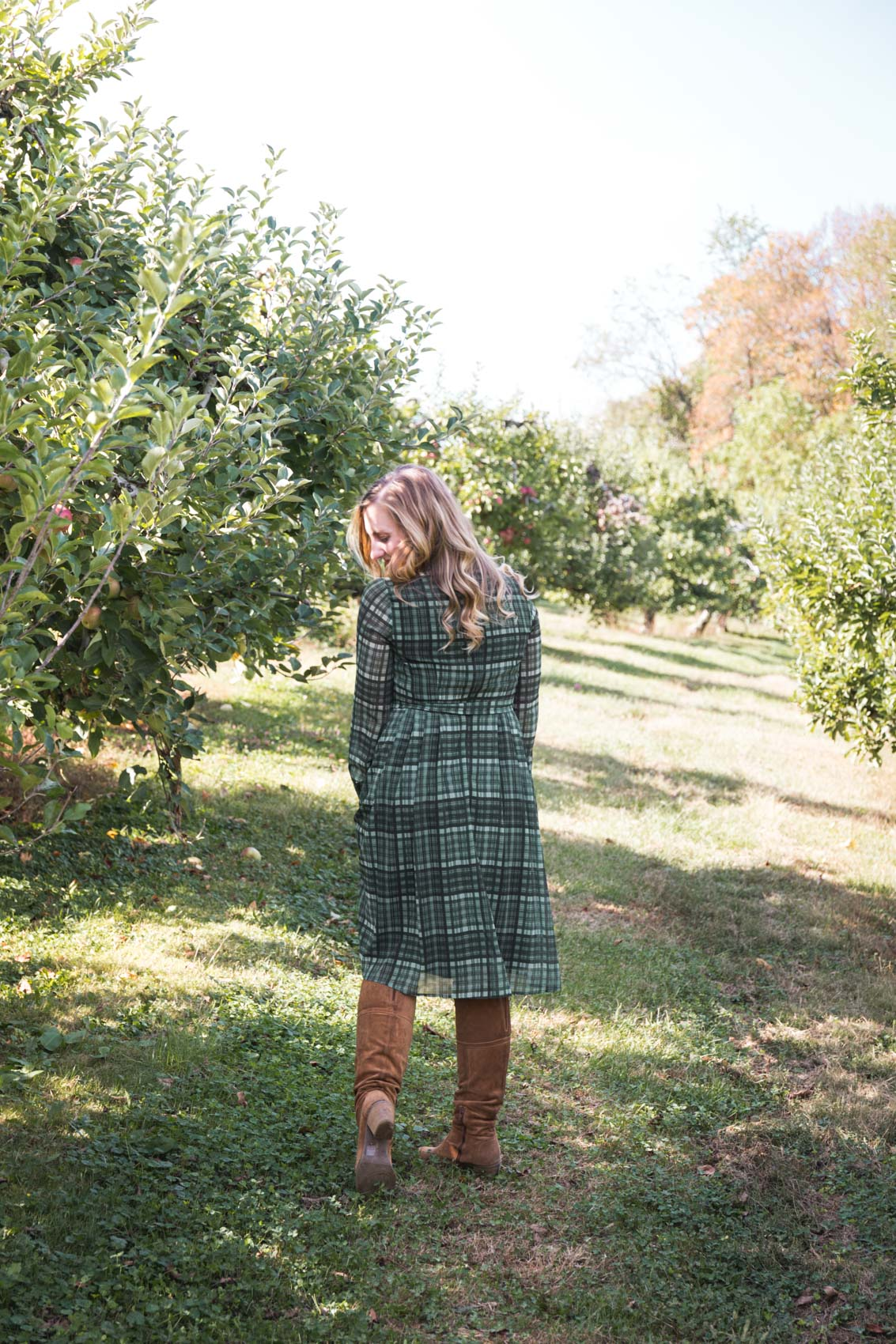 Apple picking in a Gal Meets Glam shirtdress